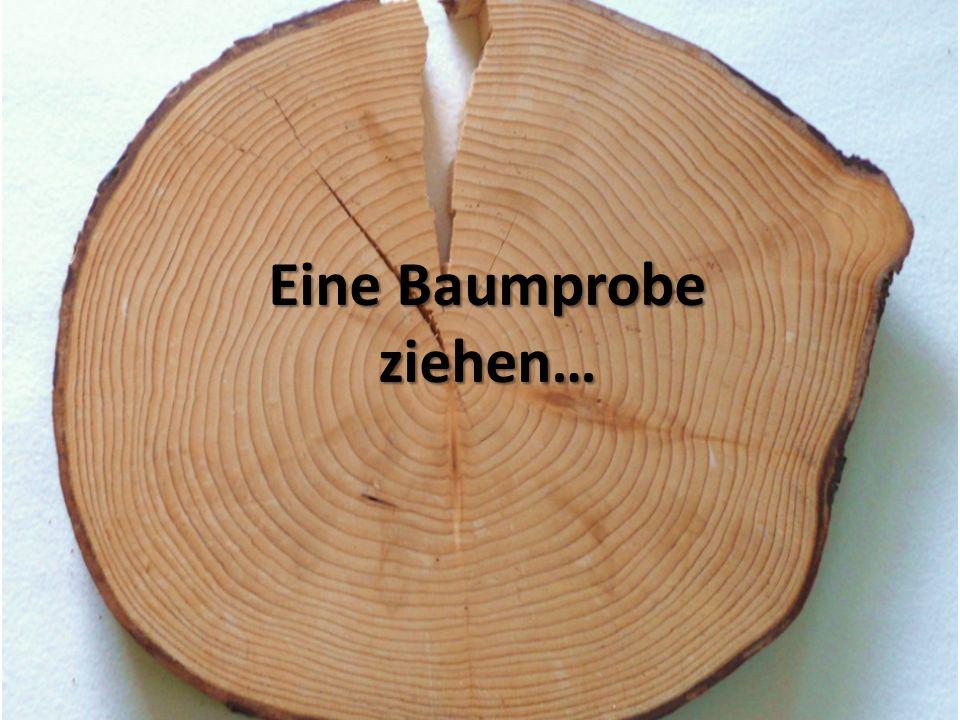 Eine Baumprobe ziehen…