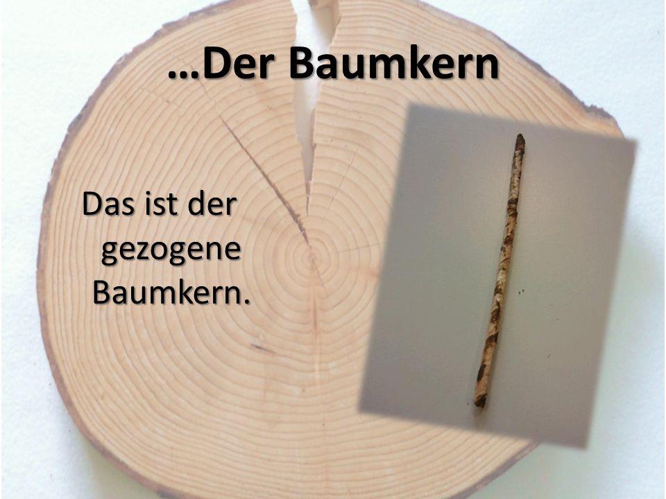 Das ist der gezogene Baumkern.