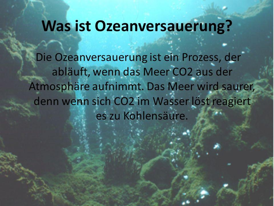 Was ist Ozeanversauerung