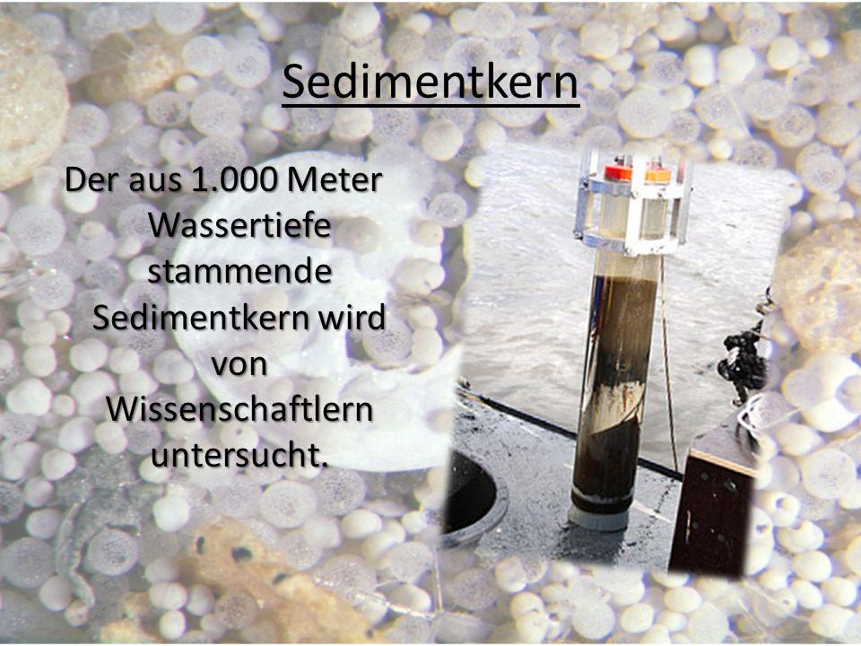 Sedimentkern Der aus 1.000 Meter Wassertiefe stammende Sedimentkern wird von Wissenschaftlern untersucht.