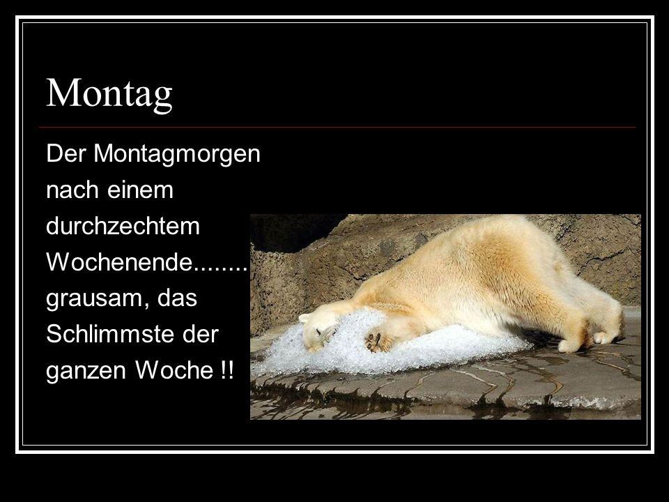 Montag Der Montagmorgen nach einem durchzechtem Wochenende...........
