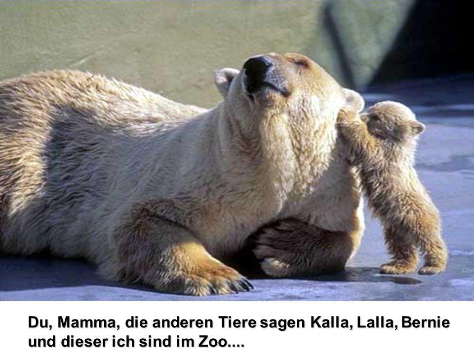 Du, Mamma, die anderen Tiere sagen Kalla, Lalla, Bernie und dieser ich sind im Zoo....