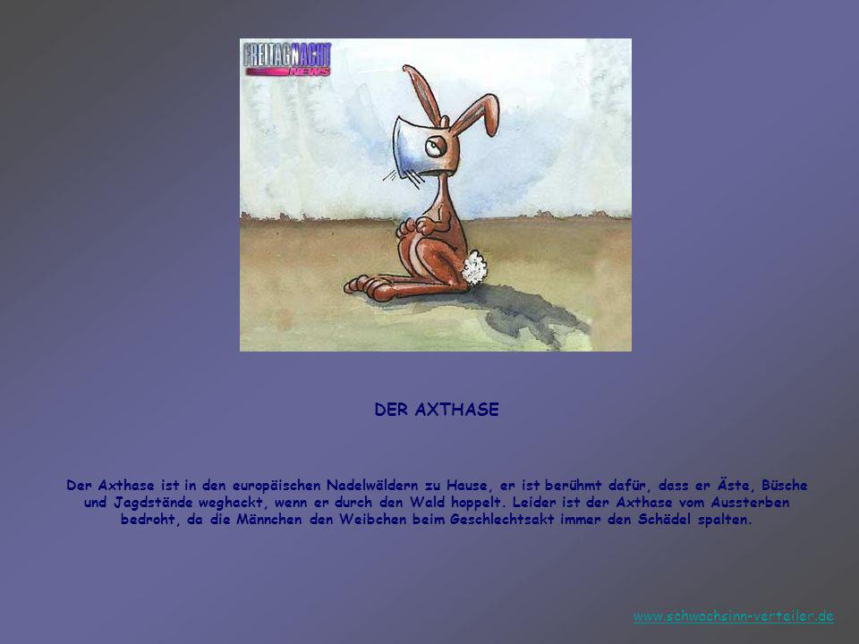 DER AXTHASE Der Axthase ist in den europäischen Nadelwäldern zu Hause, er ist berühmt dafür, dass er Äste, Büsche und Jagdstände weghackt, wenn er durch den Wald hoppelt. Leider ist der Axthase vom Aussterben bedroht, da die Männchen den Weibchen beim Geschlechtsakt immer den Schädel spalten.