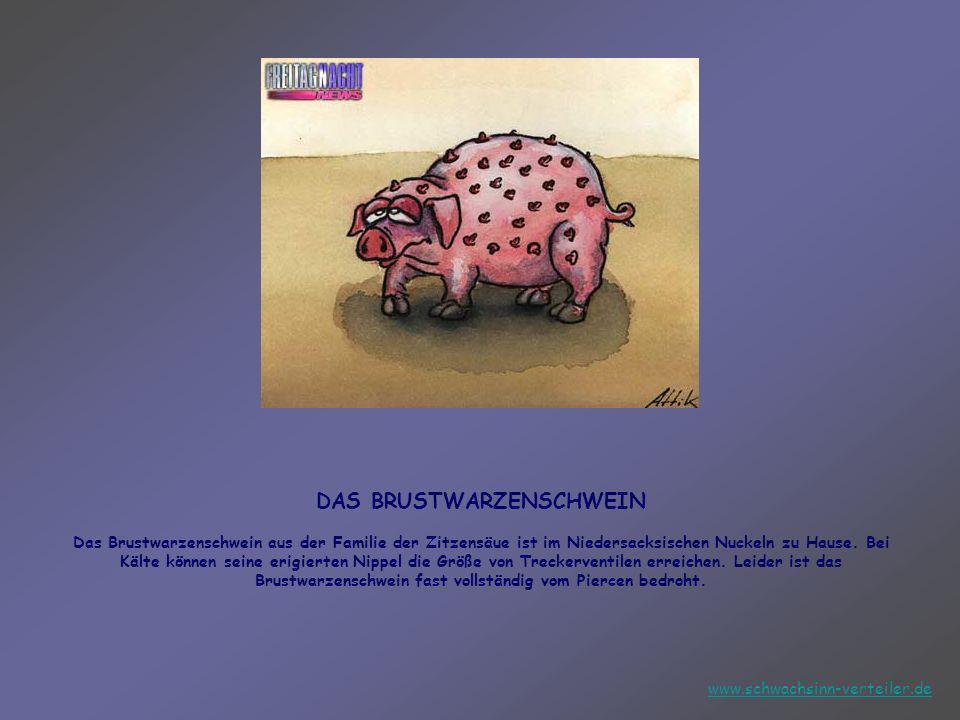 DAS BRUSTWARZENSCHWEIN Das Brustwarzenschwein aus der Familie der Zitzensäue ist im Niedersacksischen Nuckeln zu Hause. Bei Kälte können seine erigierten Nippel die Größe von Treckerventilen erreichen. Leider ist das Brustwarzenschwein fast vollständig vom Piercen bedroht.