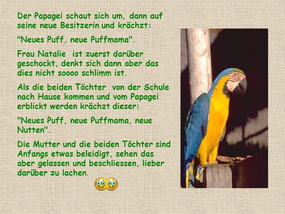 Der Papagei schaut sich um, dann auf seine neue Besitzerin und krächzt: