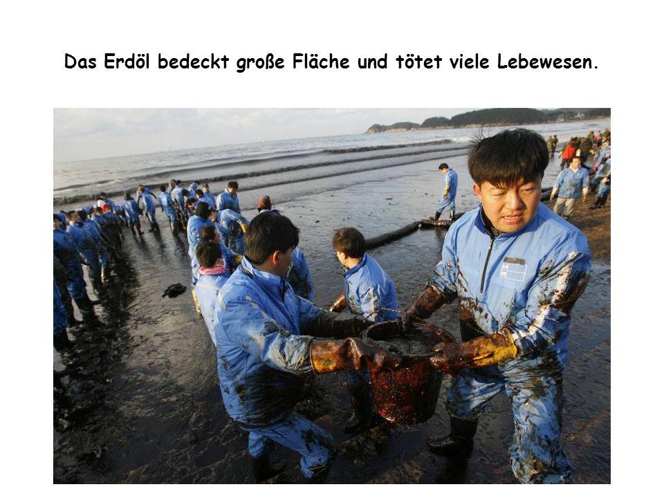 Das Erdöl bedeckt große Fläche und tötet viele Lebewesen.