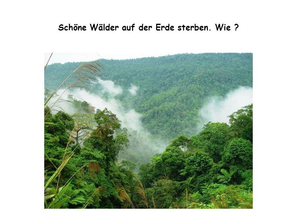 Schöne Wälder auf der Erde sterben. Wie