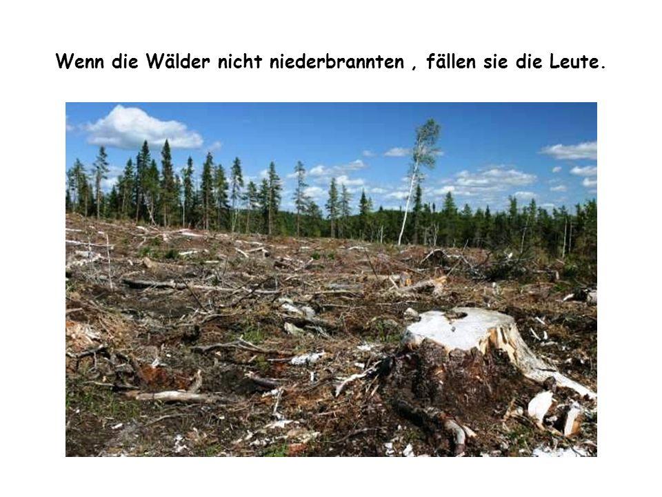 Wenn die Wälder nicht niederbrannten , fällen sie die Leute.