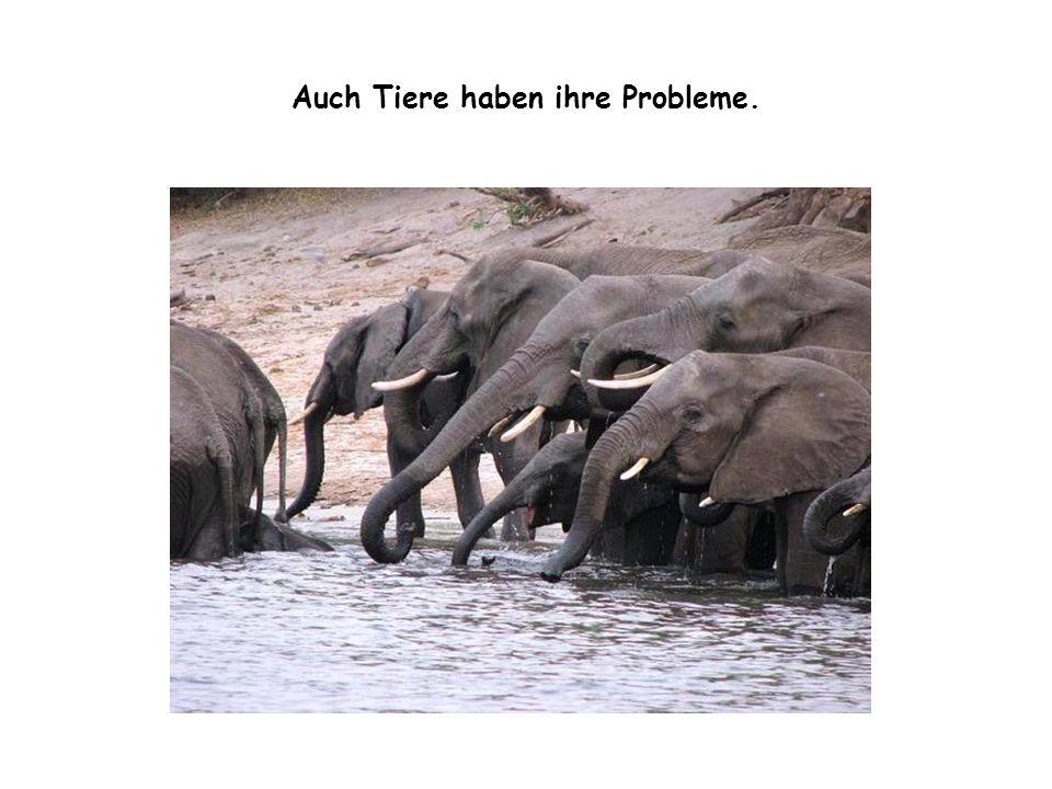 Auch Tiere haben ihre Probleme.