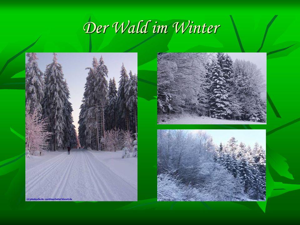Der Wald im Winter