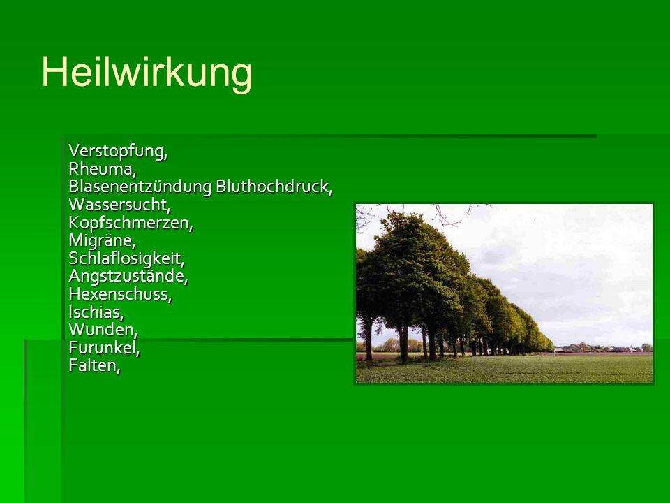 Die Linde Michal 2007/ ppt video online herunterladen