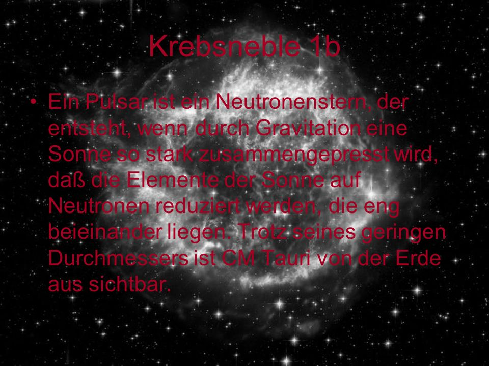 Krebsneble 1b