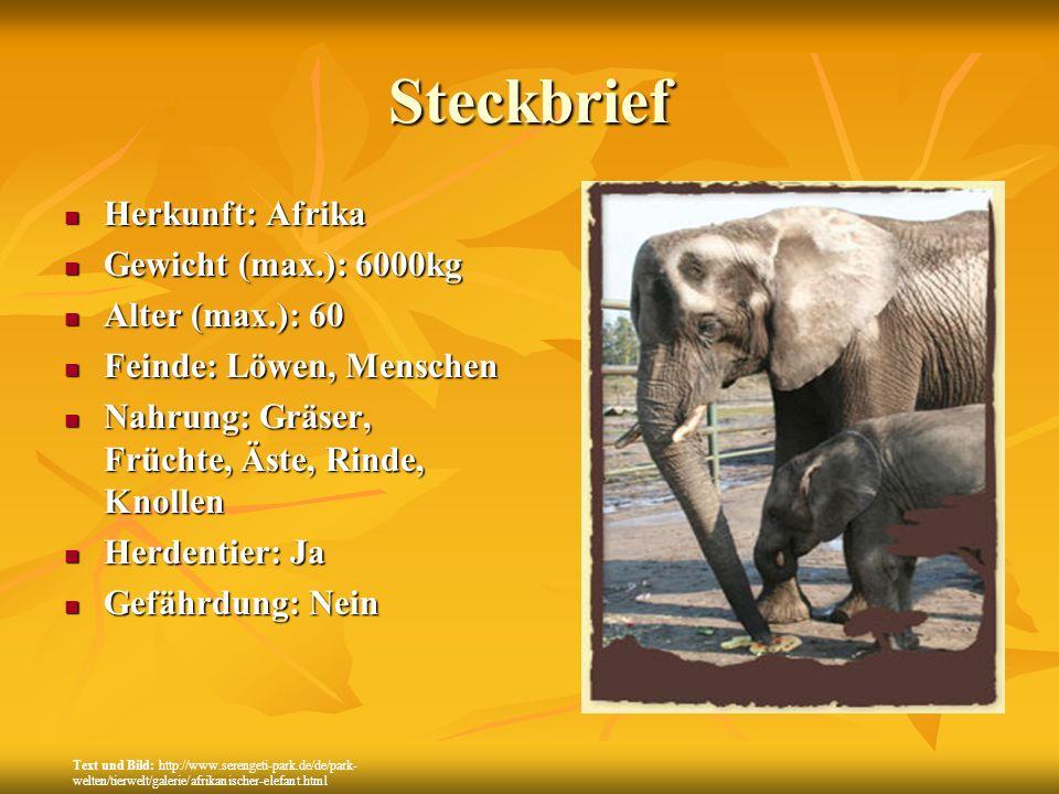 Steckbrief Herkunft: Afrika Gewicht (max.): 6000kg Alter (max.): 60