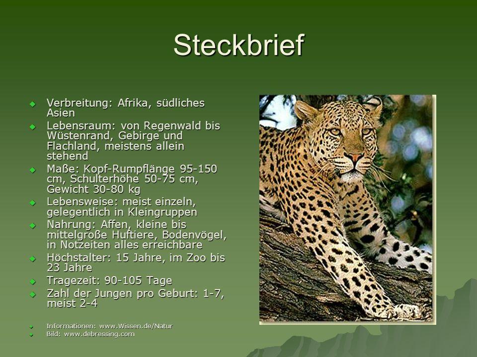 leopard tiere afrikasbenins ppt video online herunterladen