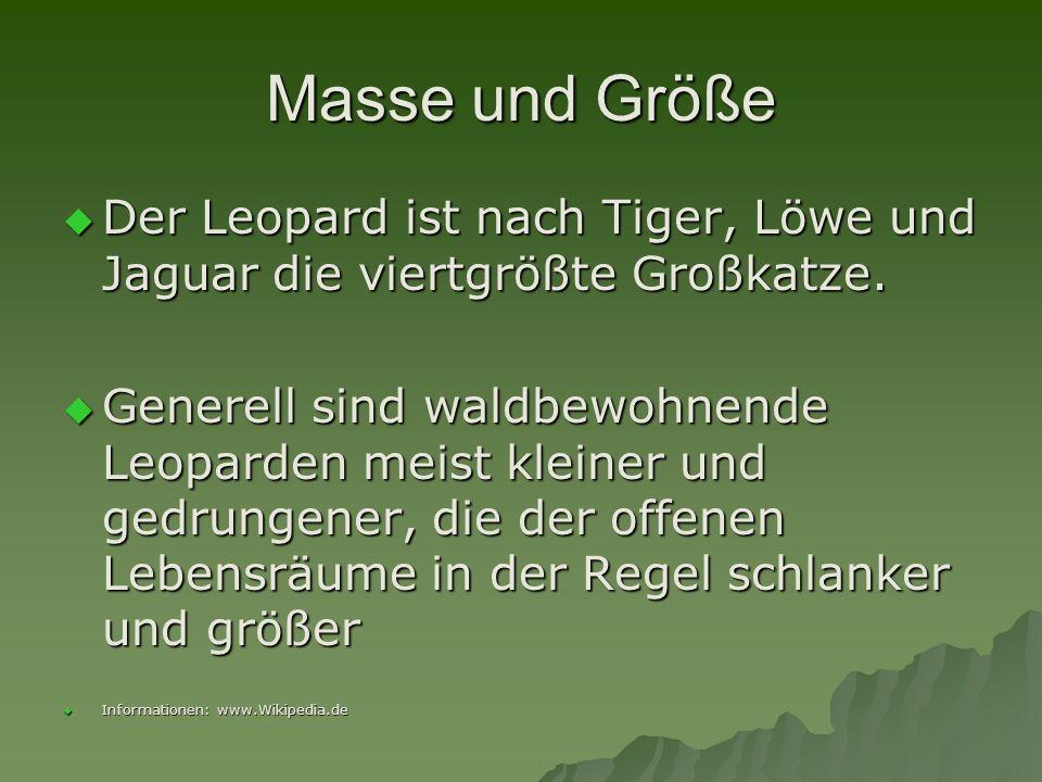 Masse und Größe Der Leopard ist nach Tiger, Löwe und Jaguar die viertgrößte Großkatze.
