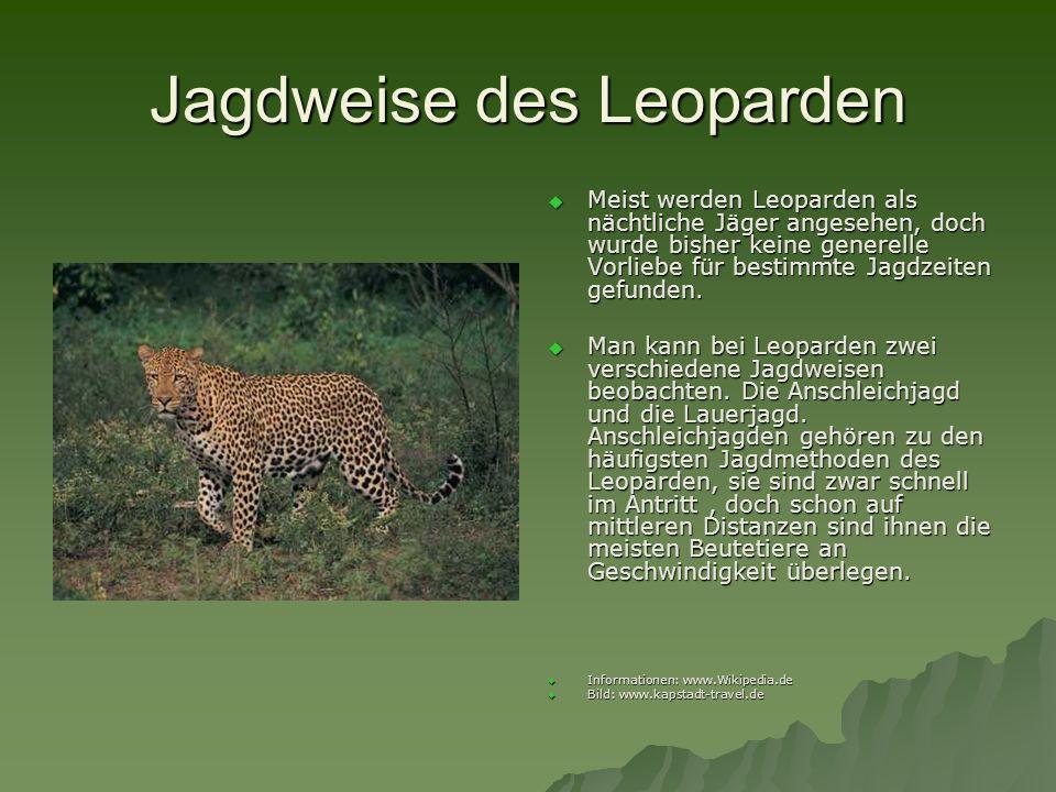 Jagdweise des Leoparden
