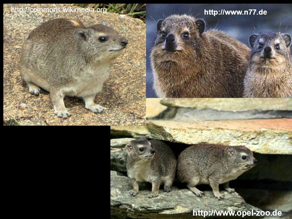 http://commons.wikimedia.org http://www.n77.de http://www.opel-zoo.de