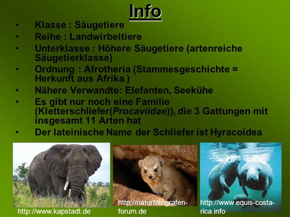 Info Klasse : Säugetiere Reihe : Landwirbeltiere
