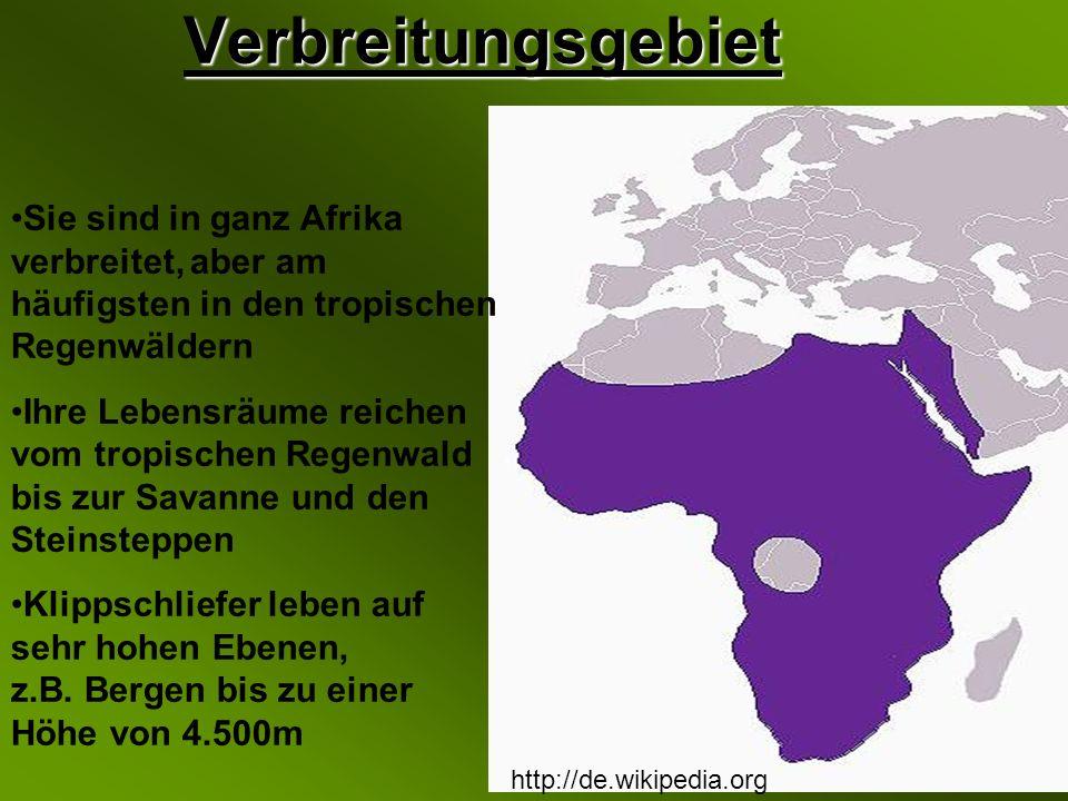 Verbreitungsgebiet Sie sind in ganz Afrika verbreitet, aber am häufigsten in den tropischen Regenwäldern.