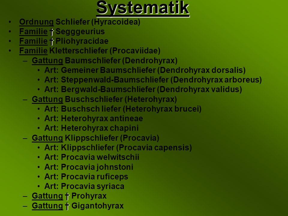 Systematik Ordnung Schliefer (Hyracoidea) Familie † Segggeurius