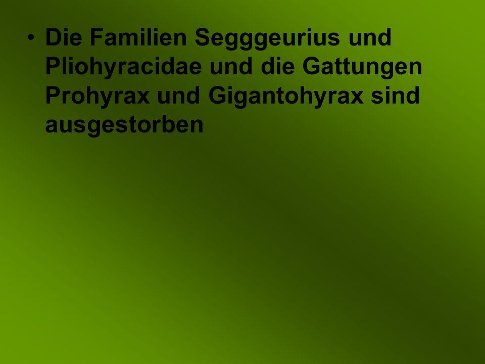 Die Familien Segggeurius und Pliohyracidae und die Gattungen Prohyrax und Gigantohyrax sind ausgestorben