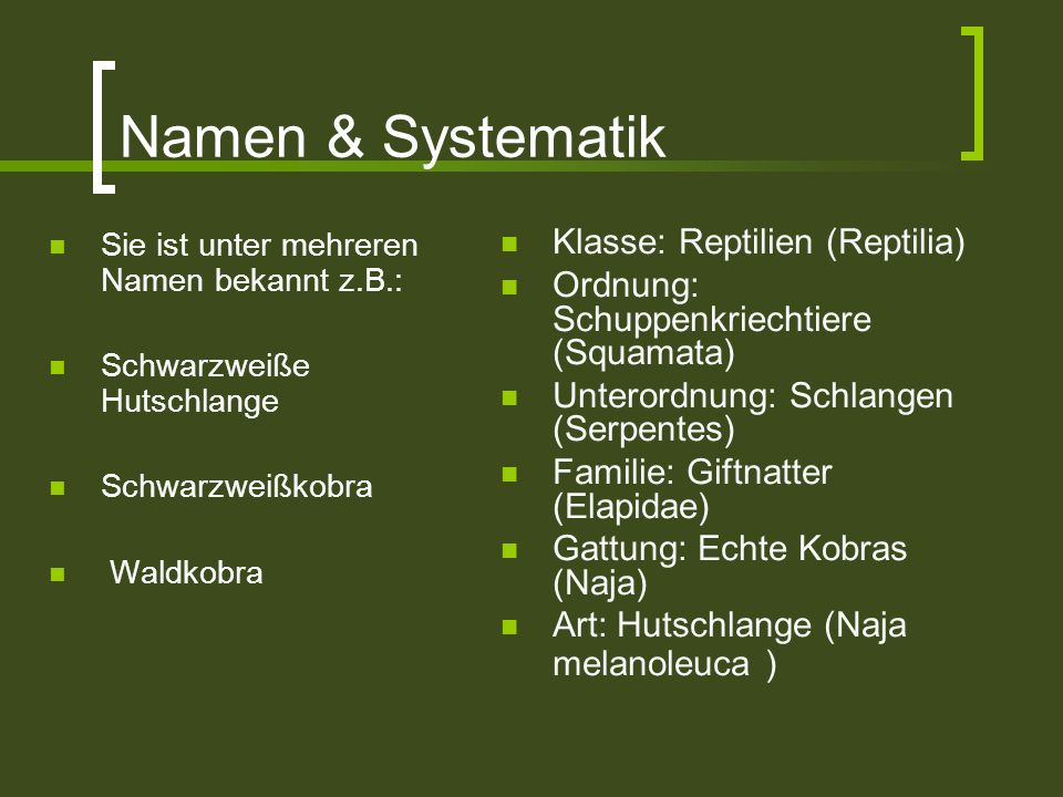 Namen & Systematik Klasse: Reptilien (Reptilia)