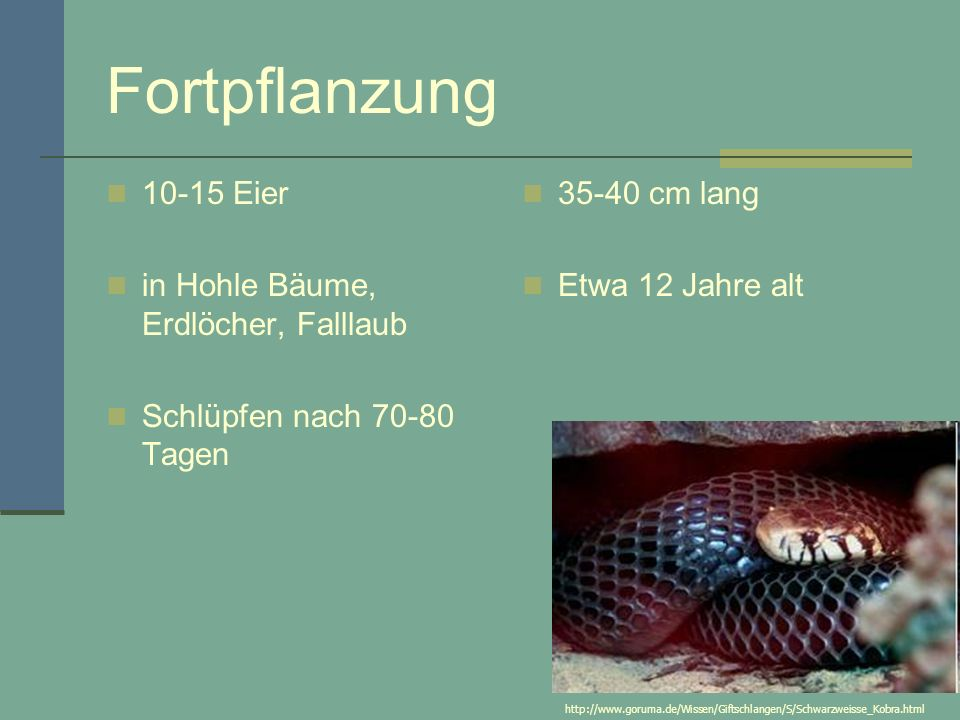 Fortpflanzung 10-15 Eier in Hohle Bäume, Erdlöcher, Falllaub