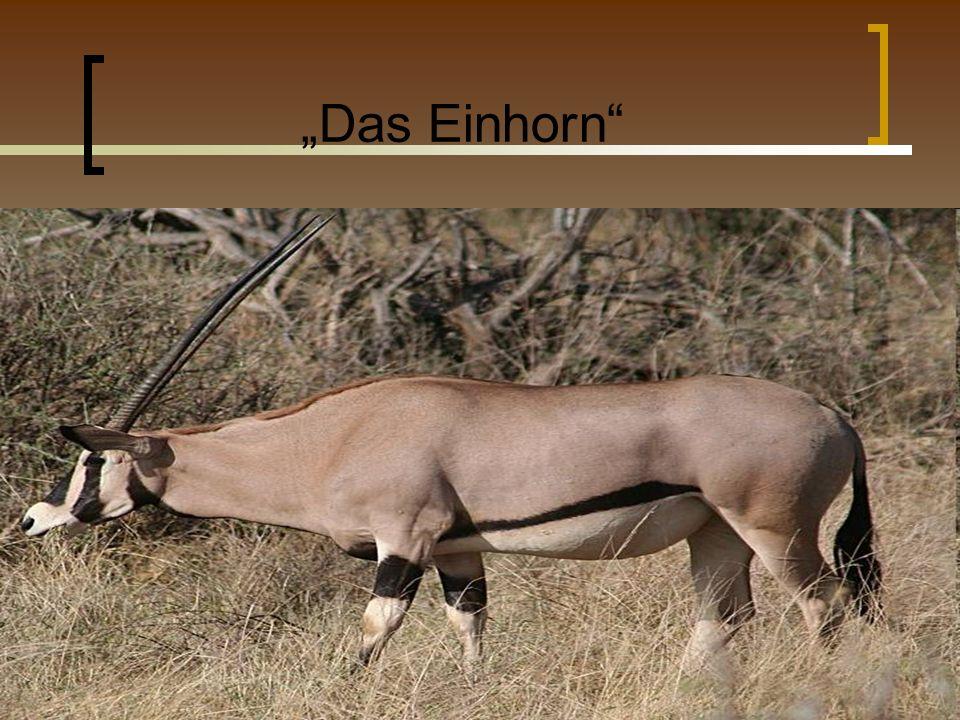 """""""Das Einhorn"""