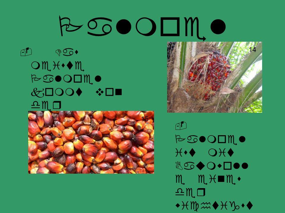 Palmoel - Das meiste Palmoel kommt von der westafrikanischen Kueste.