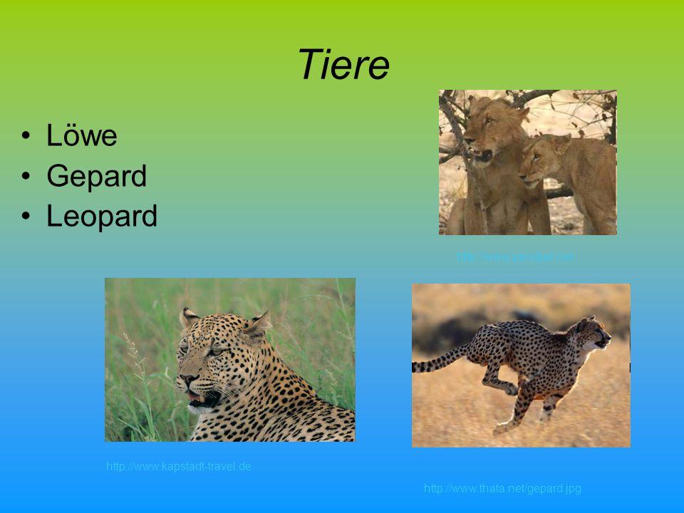 Tiere Löwe Gepard Leopard http://www.pendjari.net