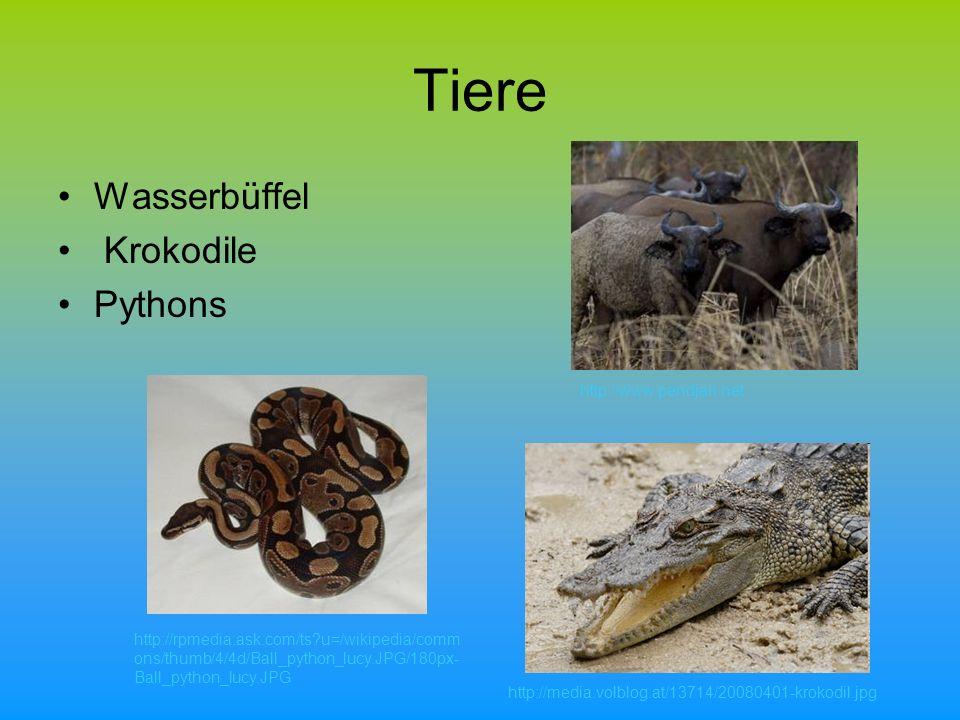 Tiere Wasserbüffel Krokodile Pythons http://www.pendjari.net