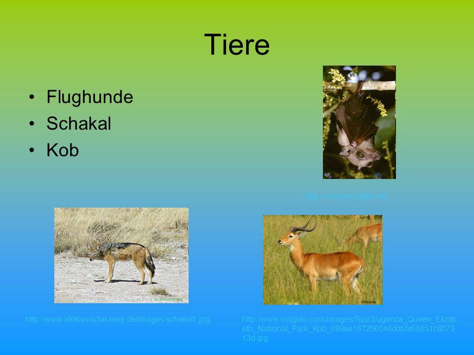 Tiere Flughunde Schakal Kob http://www.pendjari.net