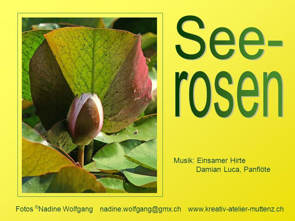 See- rosen Musik: Einsamer Hirte Damian Luca, Panflöte