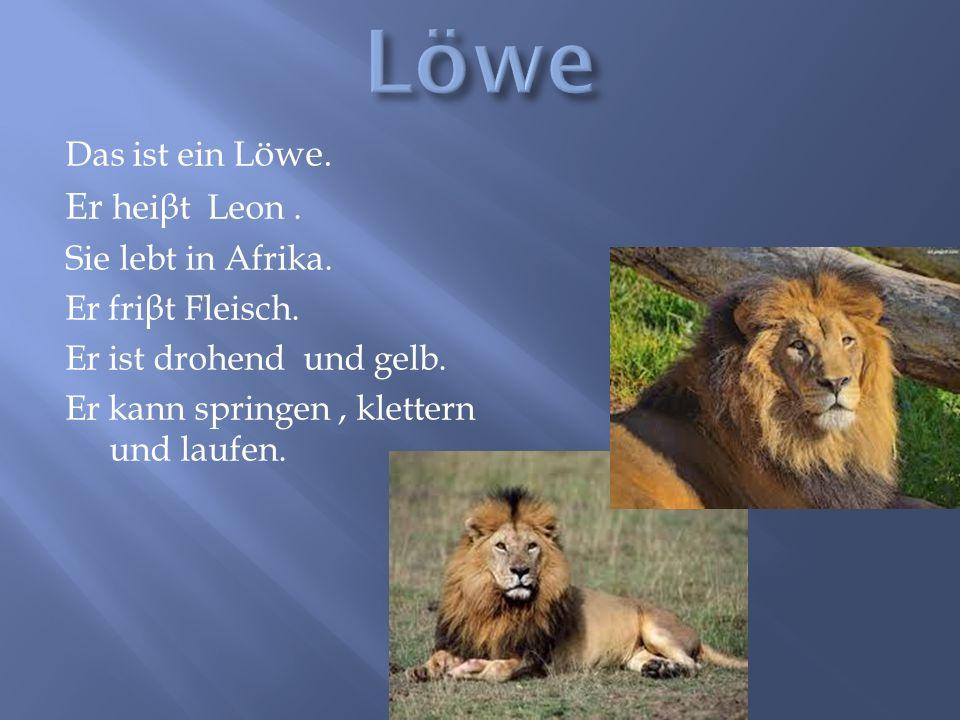 Löwe Er heiβt Leon . Das ist ein Löwe. Sie lebt in Afrika.