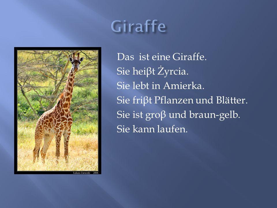 Giraffe Das ist eine Giraffe. Sie heiβt Żyrcia. Sie lebt in Amierka.