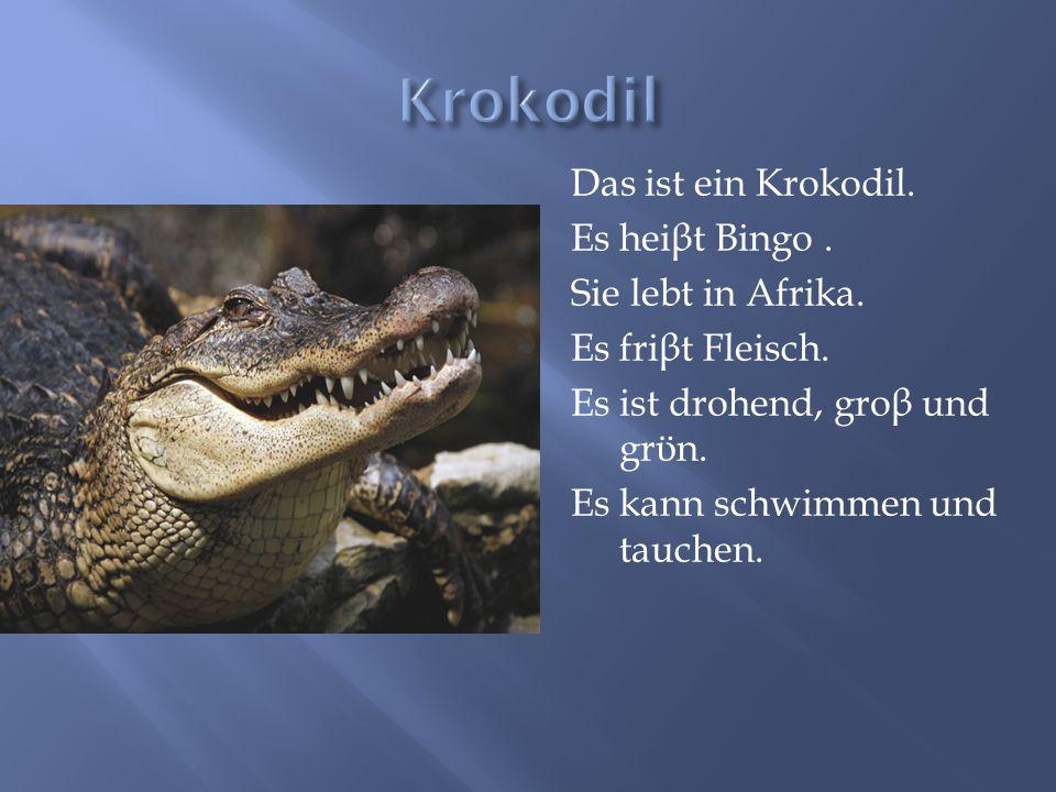 Krokodil Das ist ein Krokodil. Es heiβt Bingo . Sie lebt in Afrika.