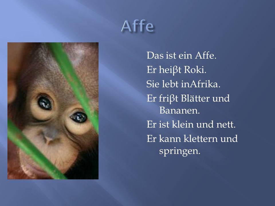 Affe Das ist ein Affe. Er heiβt Roki. Sie lebt inAfrika.