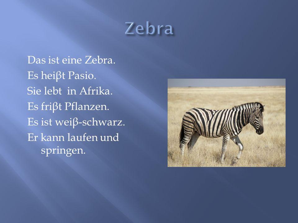 Zebra Das ist eine Zebra. Es heiβt Pasio. Sie lebt in Afrika.