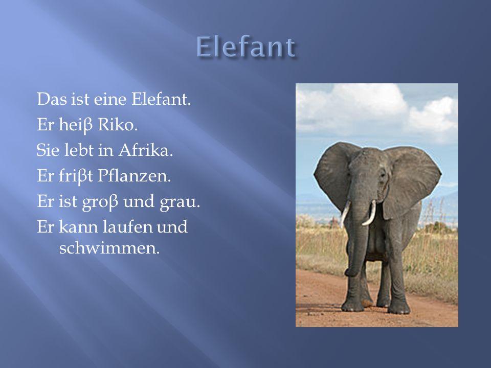 Elefant Das ist eine Elefant. Er heiβ Riko. Sie lebt in Afrika.