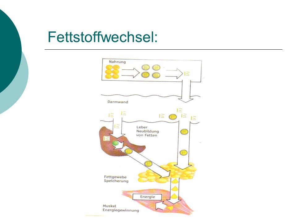 Fettstoffwechsel: