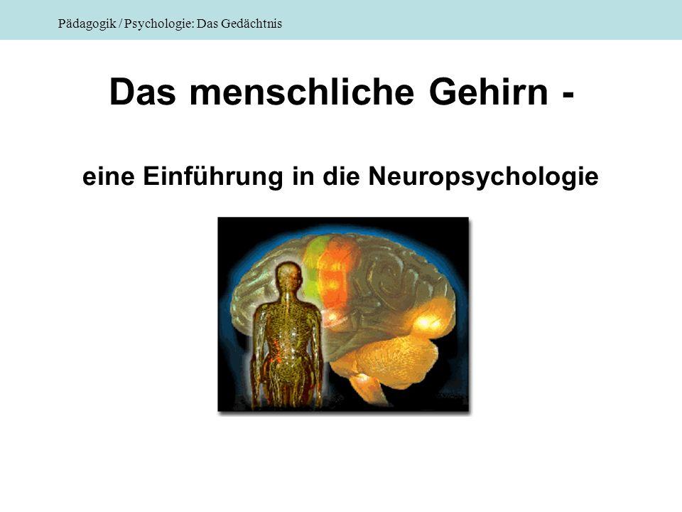 Das menschliche Gehirn - eine Einführung in die Neuropsychologie