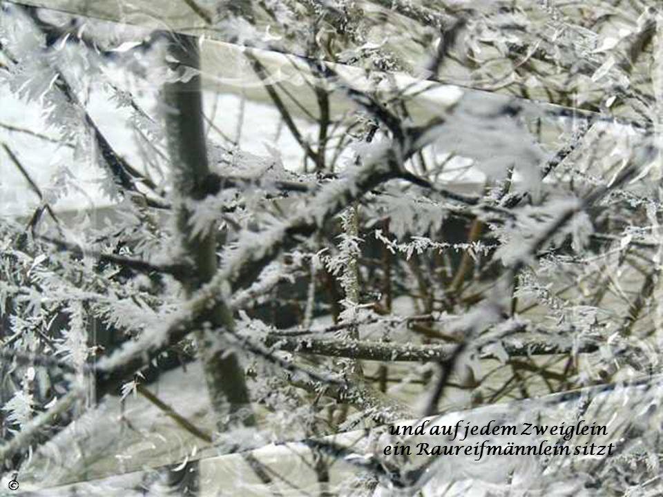und auf jedem Zweiglein ein Raureifmännlein sitzt
