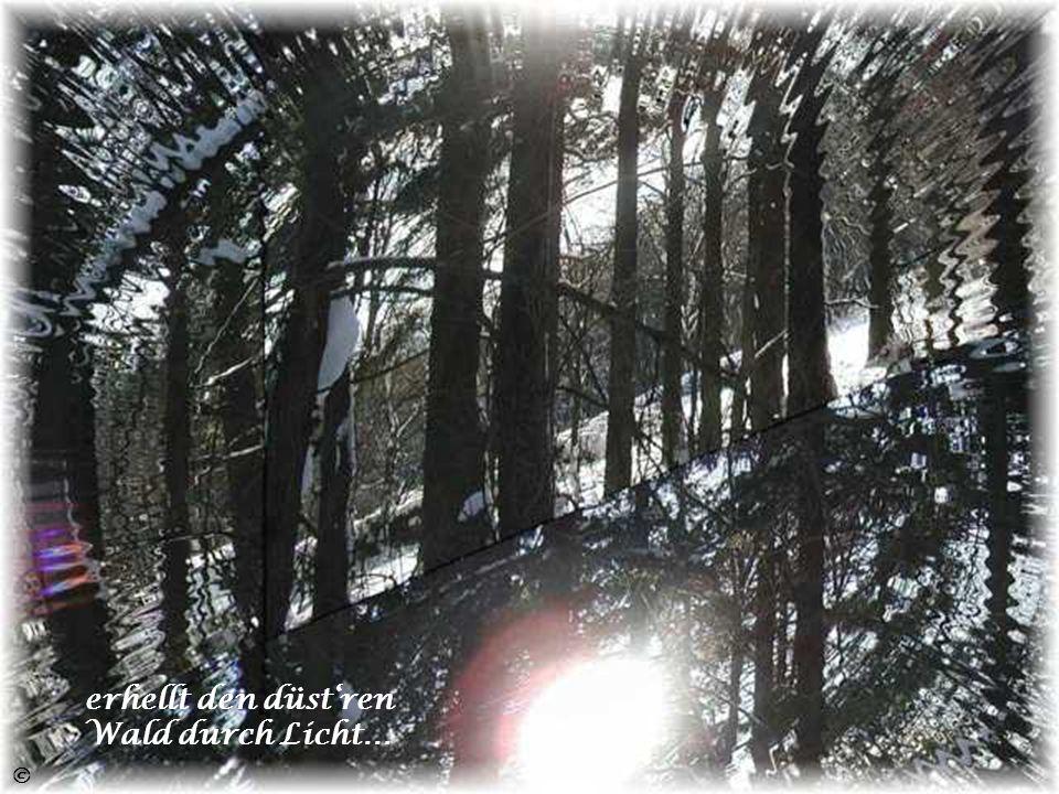 erhellt den düst'ren Wald durch Licht…