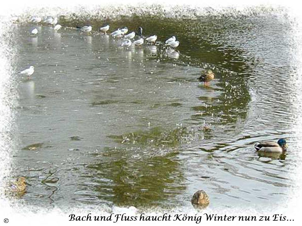 Bach und Fluss haucht König Winter nun zu Eis…