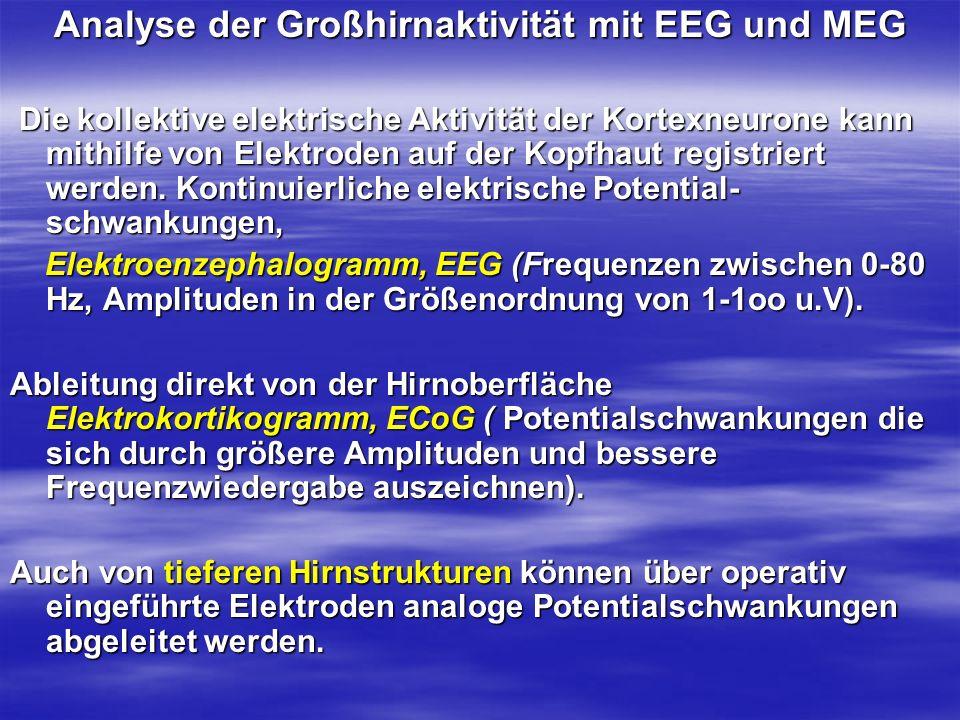 Analyse der Großhirnaktivität mit EEG und MEG