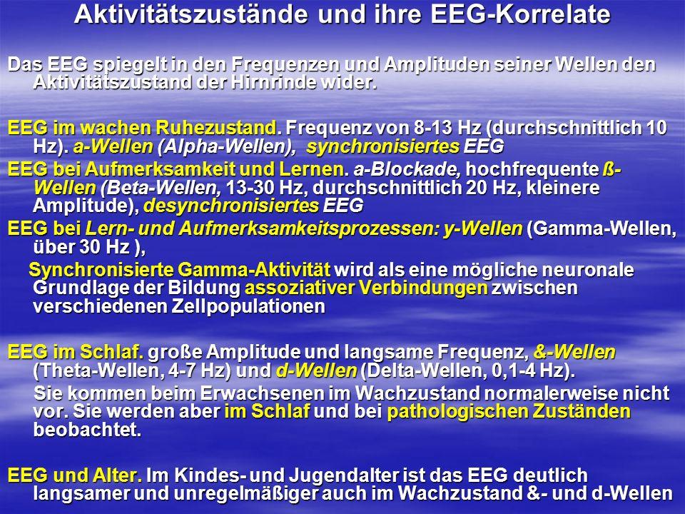 Aktivitätszustände und ihre EEG-Korrelate