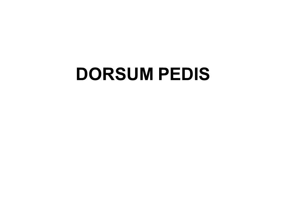 DORSUM PEDIS