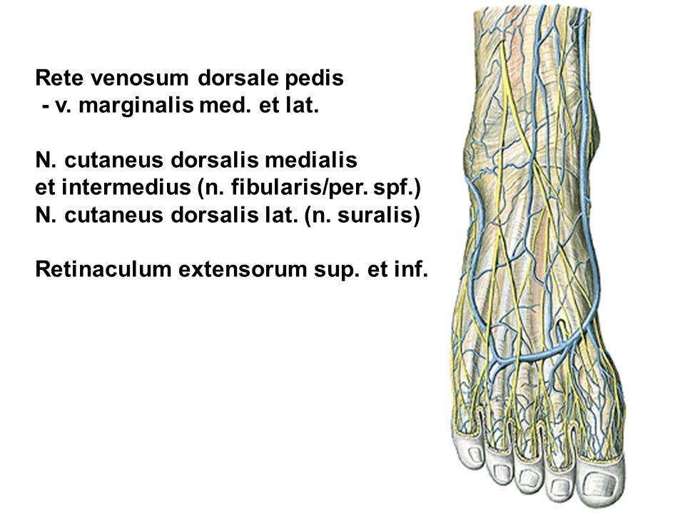 Rete venosum dorsale pedis