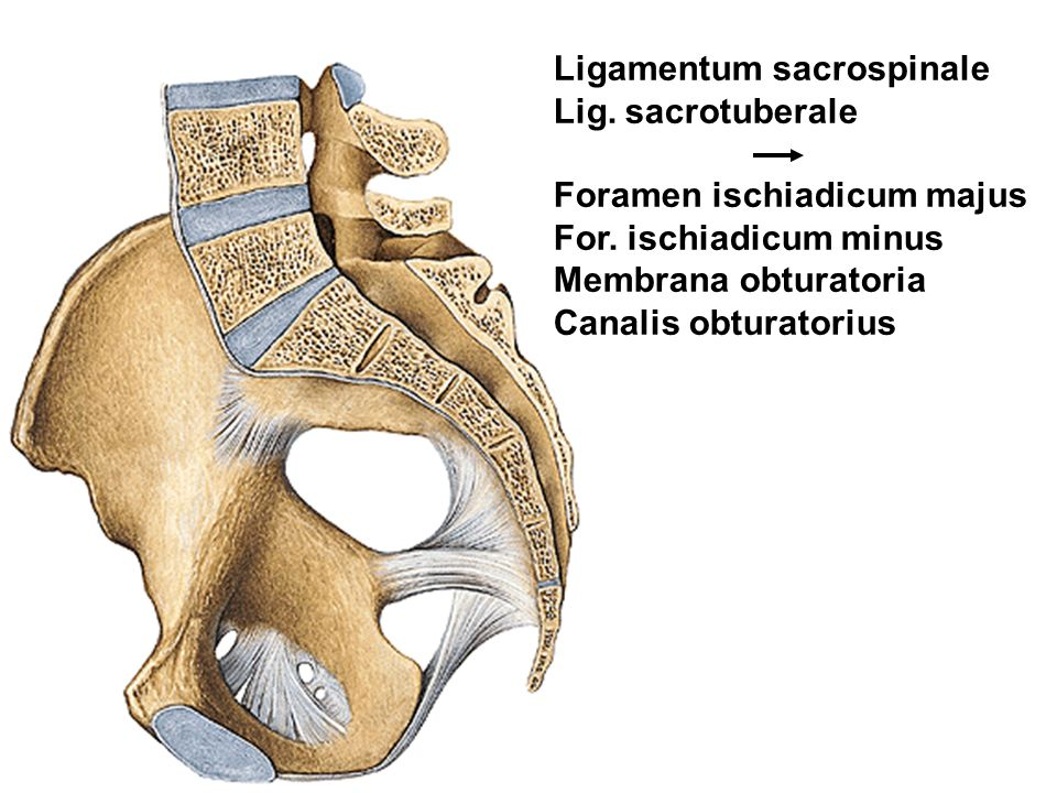Ligamentum sacrospinale