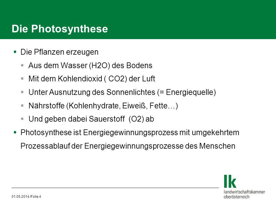Die Photosynthese Die Pflanzen erzeugen